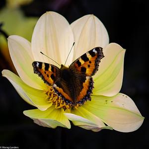 Butterfly in a Flower