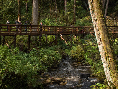 These boardwalks afforded us the opportunity to be in position to take photos of the black bears.