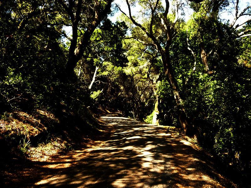 Sawyer Trail, CA