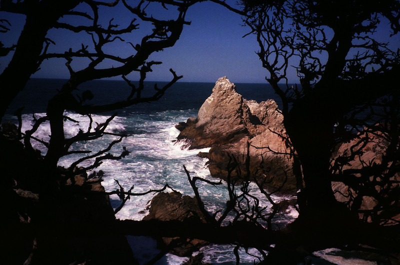Point Lobos, Big Sur, CA