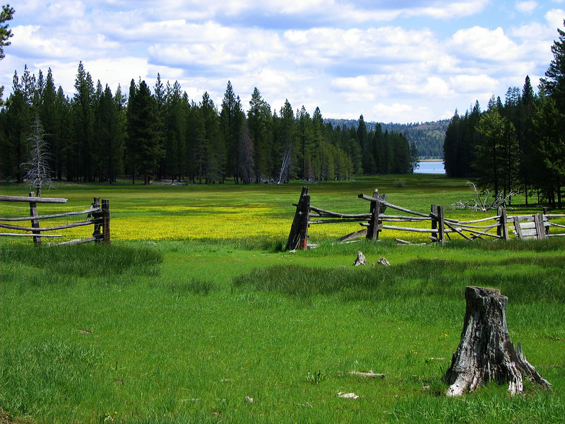 Meadow near Feather River, CA