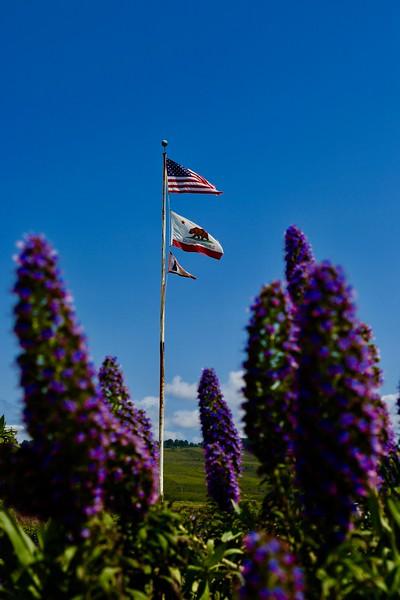 Pidgin Point Lighthouse, CA