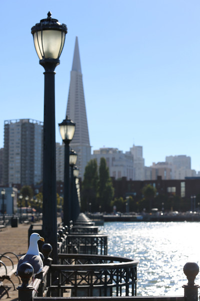 Transamerica Building from pier in San Francisco
