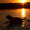 Dog, Sunset Portage Lake, MI