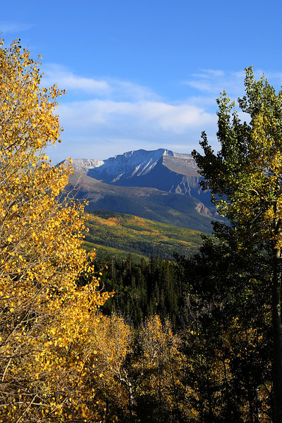 Aspens Southern Colorado