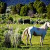Horse in Utah