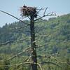 Osprey nest, Dartmouth Grant.