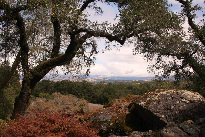 Wine country - Russian River, CA