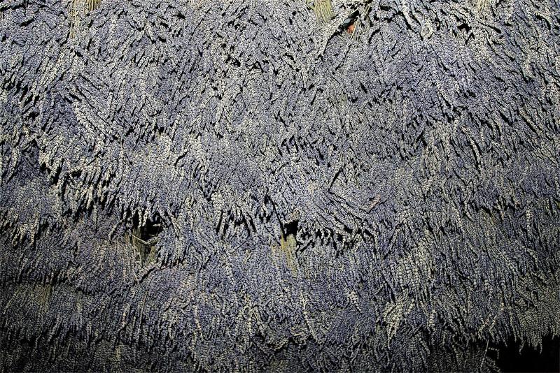 Lavender drying in the barn at Matanzas Creek Winery, Santa Rosa, CA