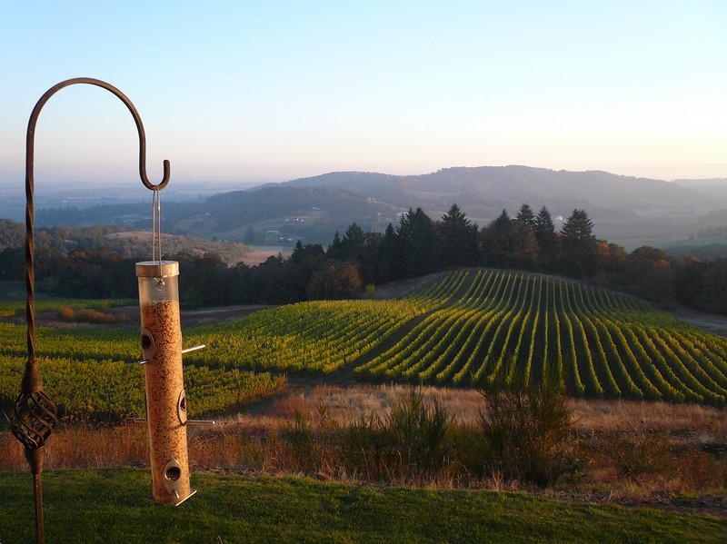 Youngberg Hill Vineyards & Inn - Willamette Valley, Oregon - fantastic B&B