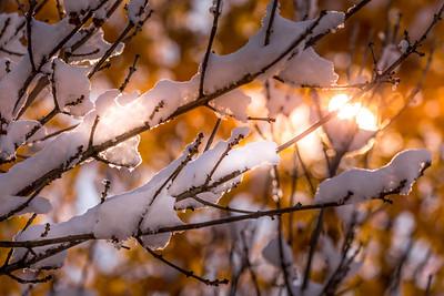 Snowy October Morning