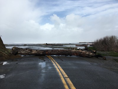 A large log blocks the path of Centerville Road near Centerville Beach on Saturday. The high surf can be seen in the background. (Ruth Schneider - The Times-Standard)