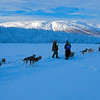 Dogsled in Abisko