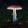 Mushroom, Tyresö Sweden