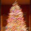 NWS-PT122514-tree10.jpg
