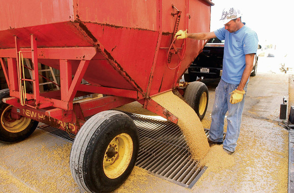 P-T file photo<br /> FALL HARVEST: Walton Grain elevator employee Josh Overpeck unloads a wagon of grain at the facility on Wednesday.