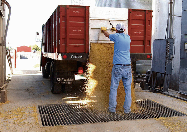 P-T file photo<br /> HARVEST BOUNTY: Walton Grain elevator employee Josh Overpeck unloads a truck load of grain at the facility on Wednesday.