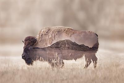 Bison Bear Butte Double Exposure.