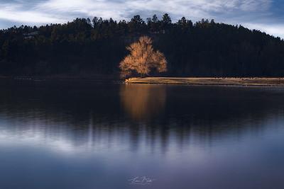 That Lone Tree.