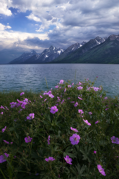 Wyoming Wildflowers.