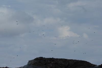 40 Blue Herons