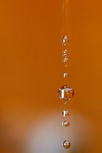 42 Orange drops