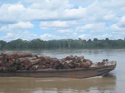 Amazon Harvest