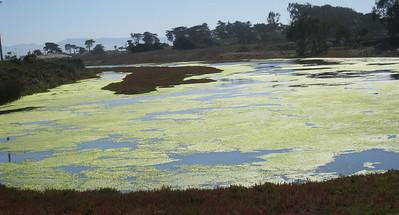 Moss Landing 9-30-09  7