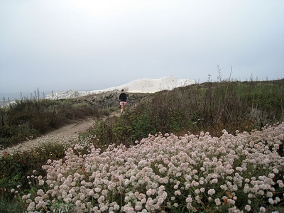 Point Lobos 8:2009 7
