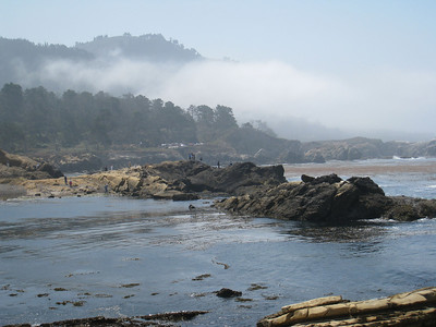 Point Lobos 8:2009 22