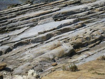 Point Lobos 8:2009 21