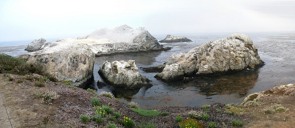 Point Lobos 8:2009 9