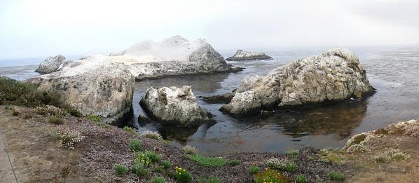 Point Lobos 8:2009 9