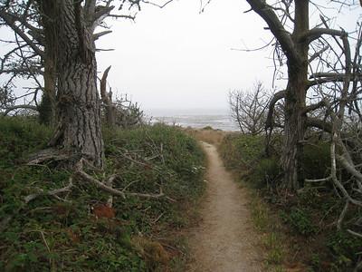 Point Lobos 8:2009 14