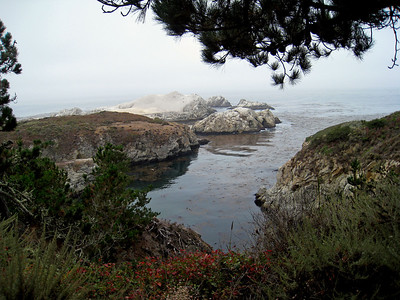 Point Lobos 8:2009 3