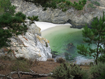 Point Lobos 8:2009 4