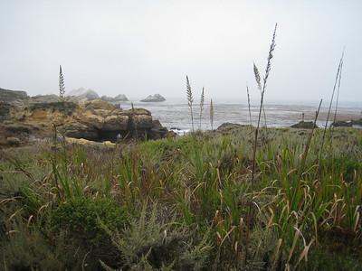 Point Lobos 8:2009 16