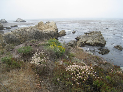 Point Lobos 8:2009 17