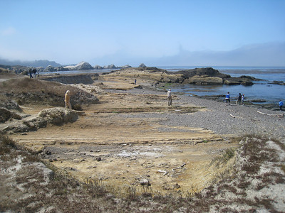 Point Lobos 8:2009 19