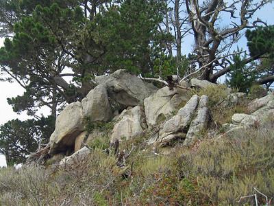 Point Lobos 8:2009 23