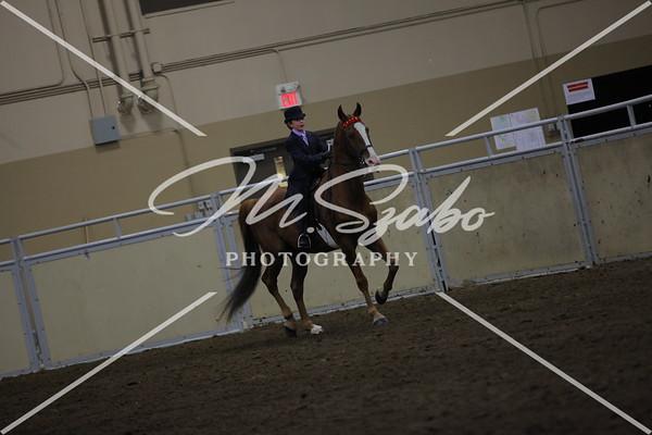 All Breed English Pleasure Jr Rider
