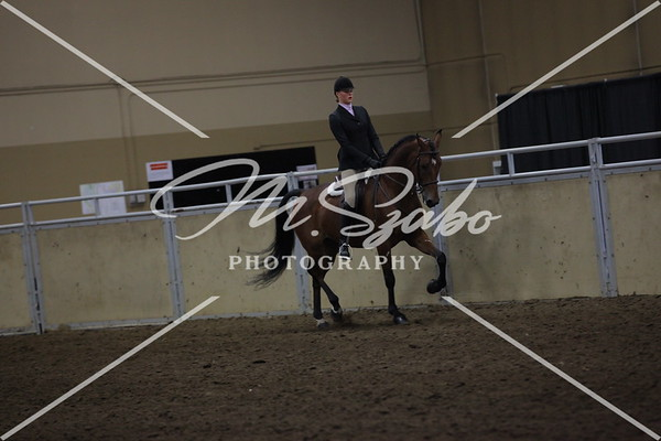 All Breed Hunter Pleasure Jr Rider