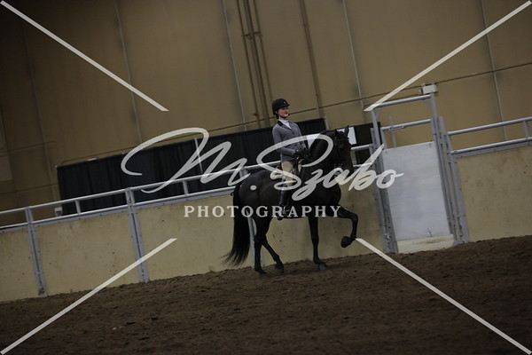 All Breed any Seat Equitation Jr Rider STAKE