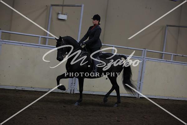 Morgan Classic Pleasure Saddle CHAMPIONSHIP