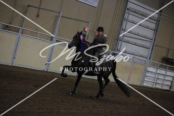 Morgan English Pleasure Jr Horse CHAMPIONSHIP