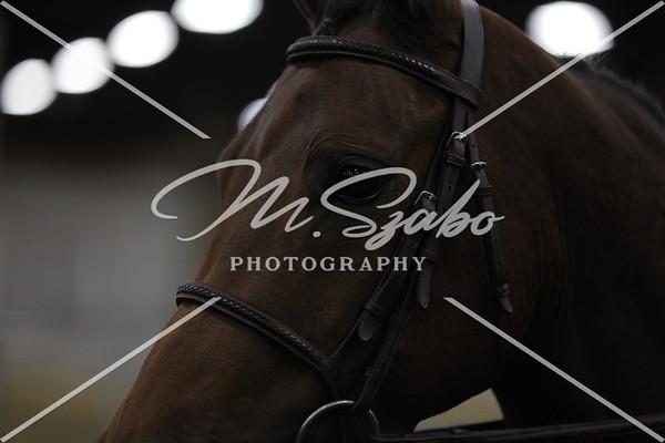 Morgan Hunter Pleasure Jr Horse CHAMPIONSHIP