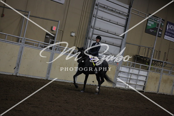 Morgan Hunter Pleasure Jr Rider CHAMPIONSHIP