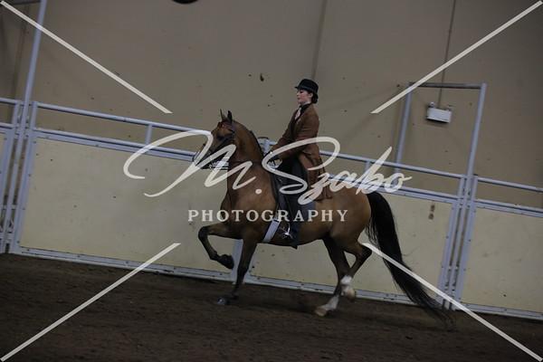 Morgan Park Saddle CHAMPIONSHIP
