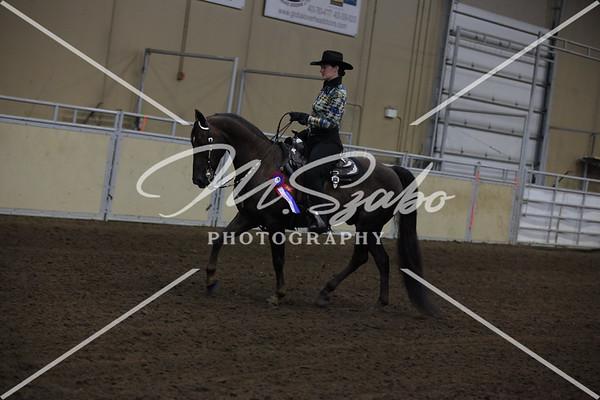 Morgan Western Pleasure Amateur CHAMPIONSHIP