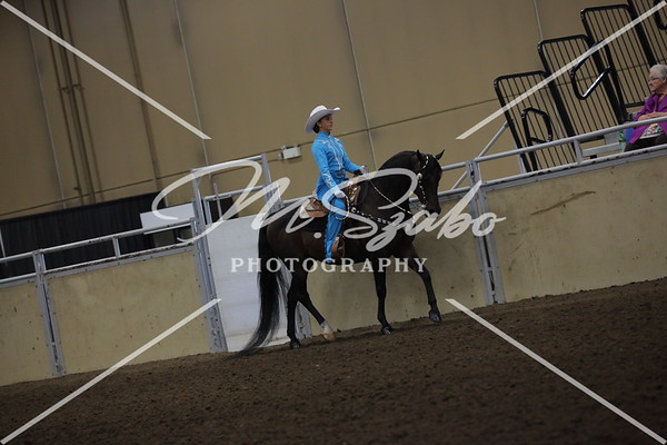 Morgan Western Pleasure Jr Rider 17 years & Under